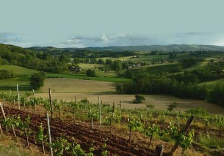 Wines from the South-West - Marcillac