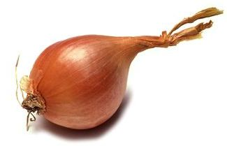 French Shallot