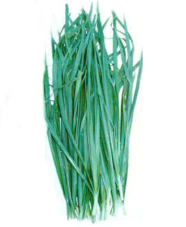 Chinese chives or Chinese leek