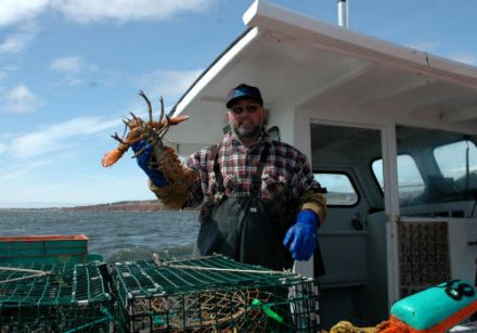 Gaspé Peninsula lobster 4