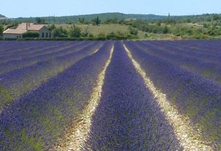 The Cuisine of Alpes Haute-Provence